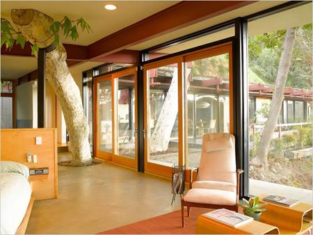 Interior - sycamore tree