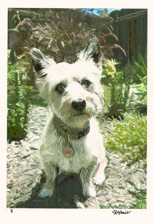 Audry ~ Cairn Terrier