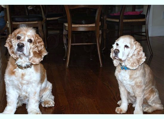 Grady and Lucky at the dinner table