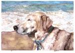 Daisy at the beach.