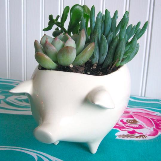 Pot-bellied piggy planters…